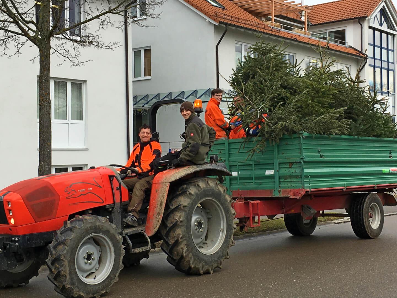 Am 09. Januar werden die Christbäume eingesammelt.